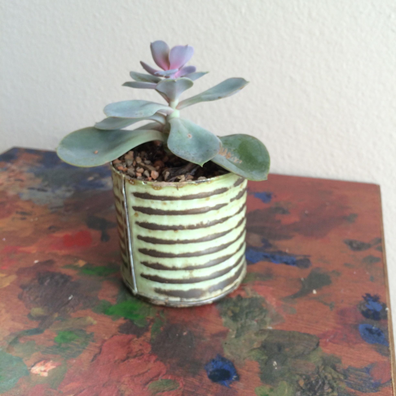 Redenta's succulent