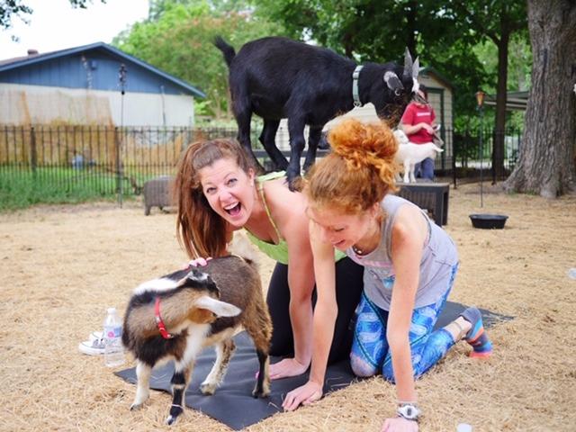 Goat Yoga Dallas