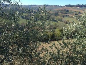 olive harvest thesweetwanderlust.com