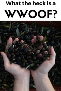 What the heck is a WWOOF? thesweetwanderlust.com