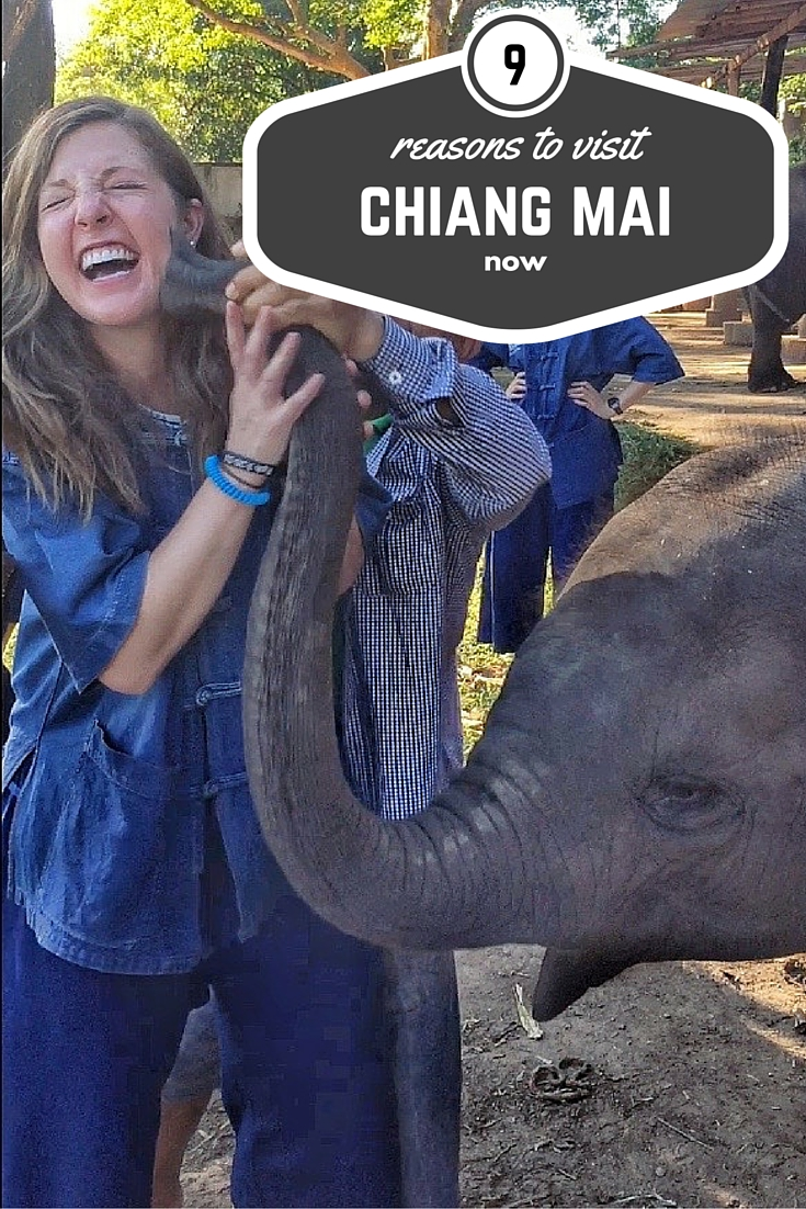 9 reasons to visit Chiang Mai now thesweetwanderlust.com