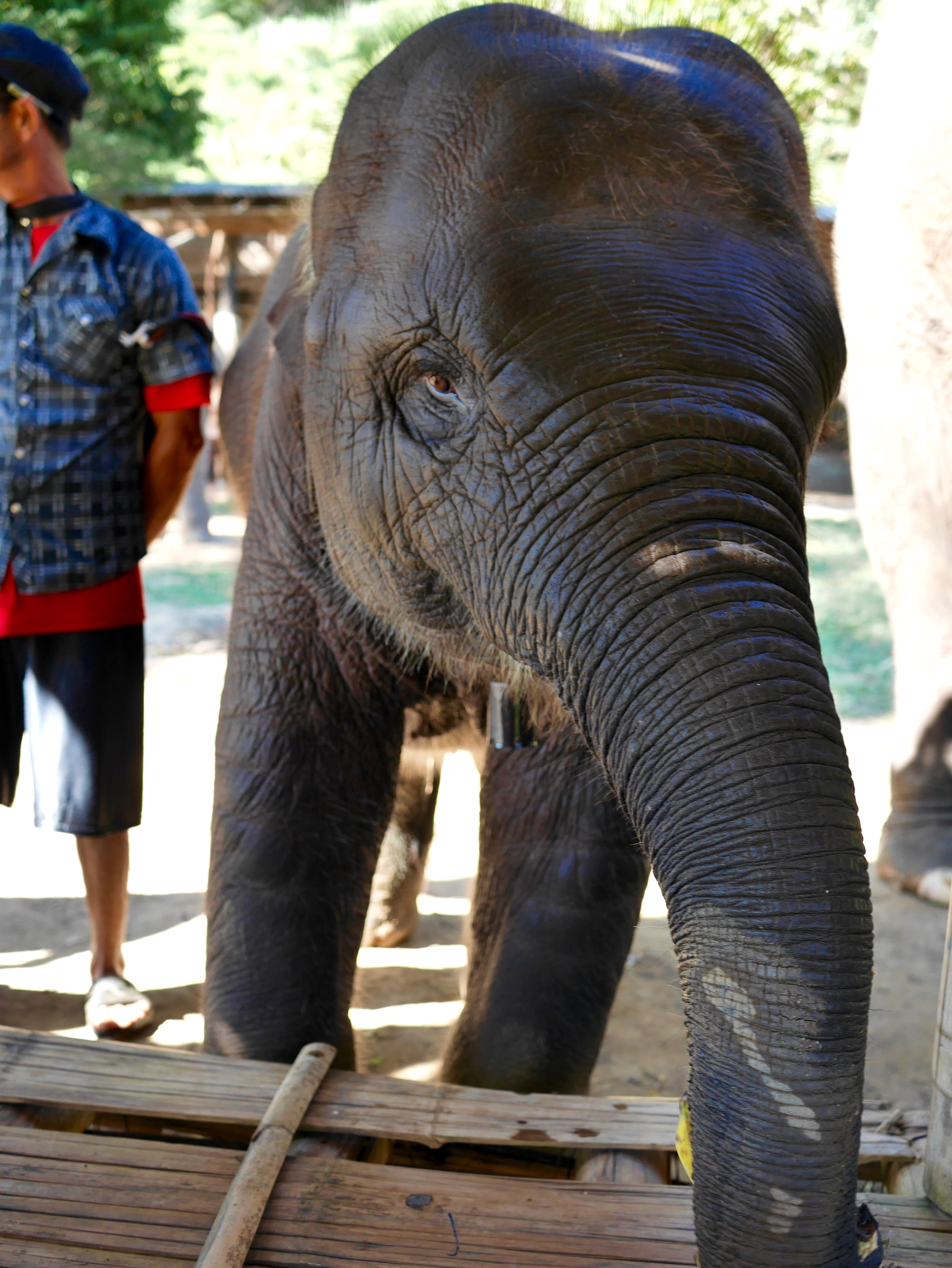 Blue Elephant Tours baby Chiang Mai Thailand thesweetwanderlust.com