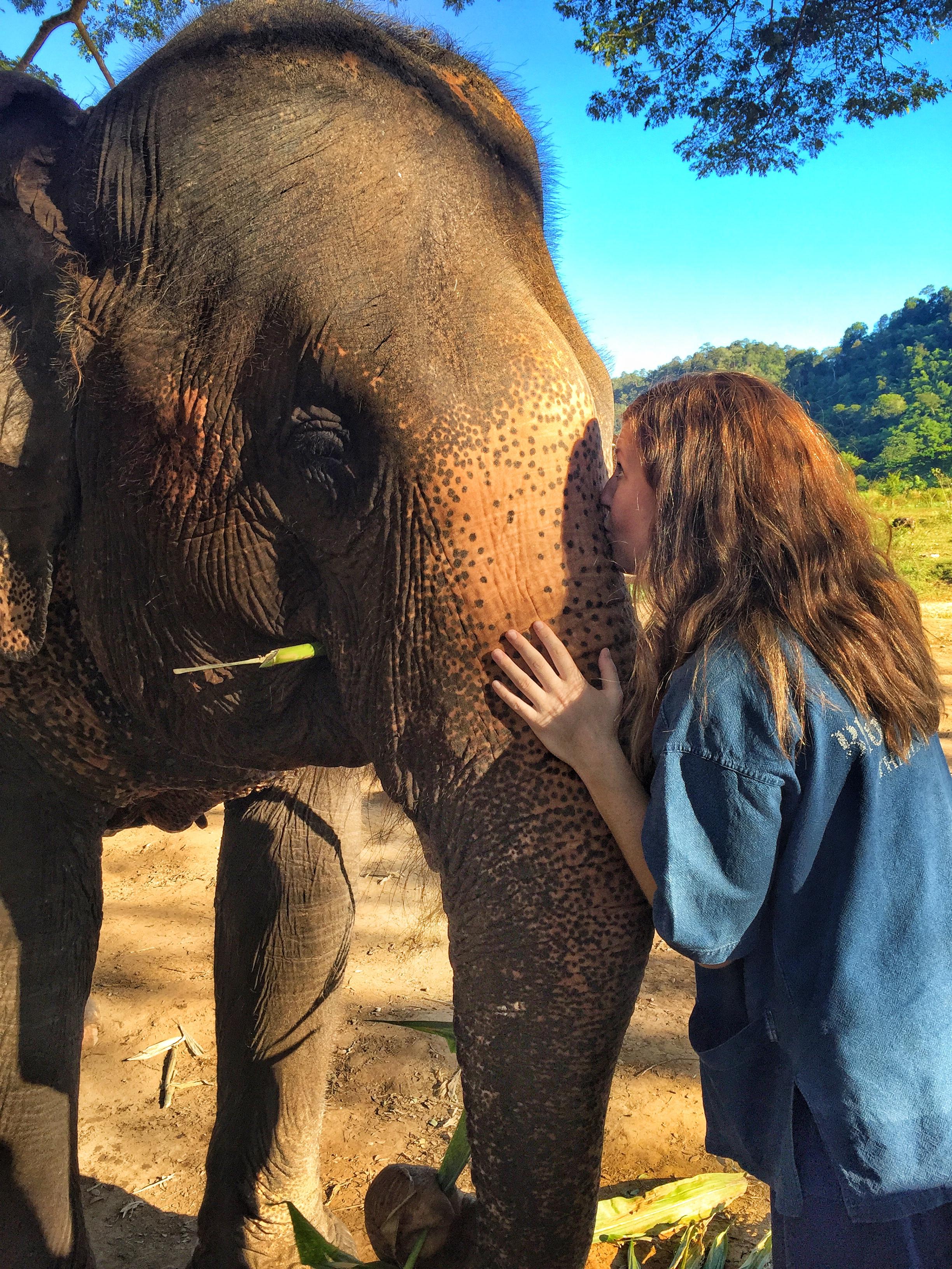 Blue Elephant Tours thesweetwanderlust.com