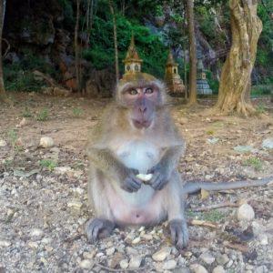 Khao Sok- monkey temple thesweetwanderlust.com