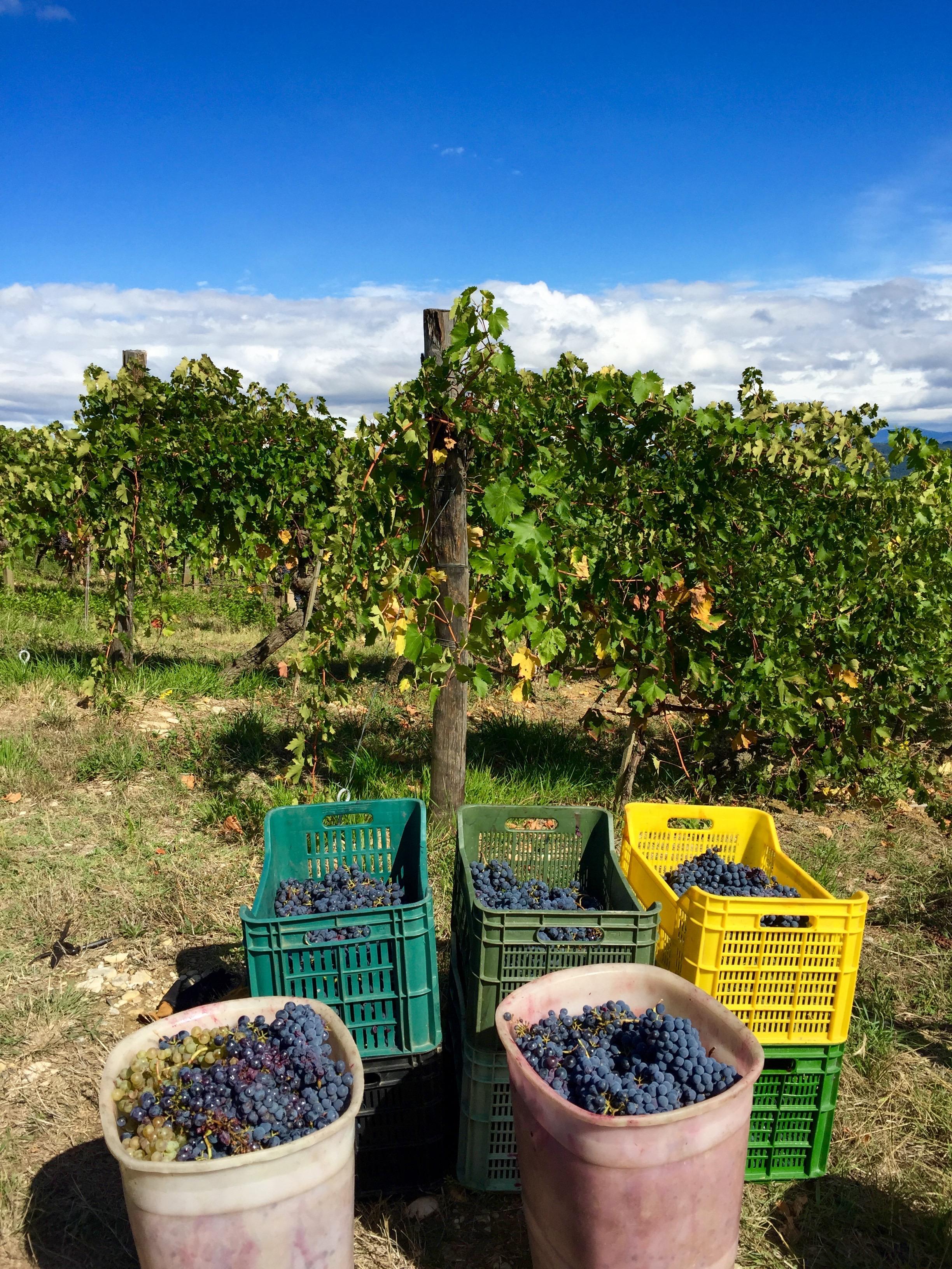 Podere Gualandi vineyard thesweetwanderlust.com