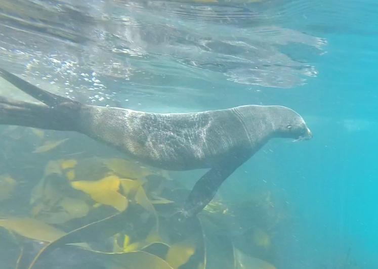 SealSwimKairoura thesweetwanderlust.com