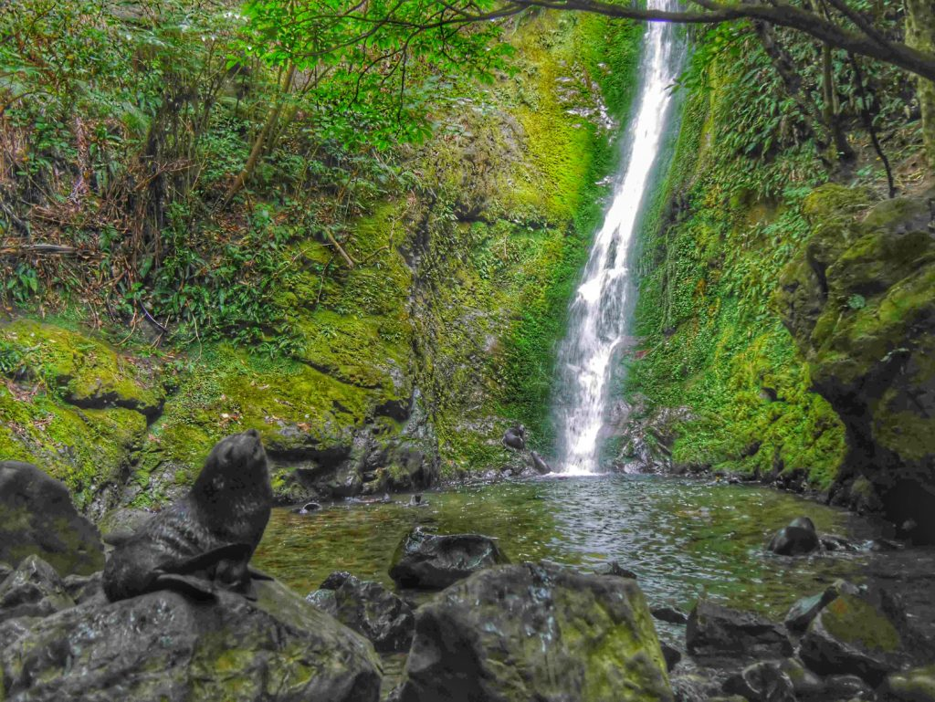 Oahu Waterfall Kaikoura New Zealand thesweetwanderlust.com