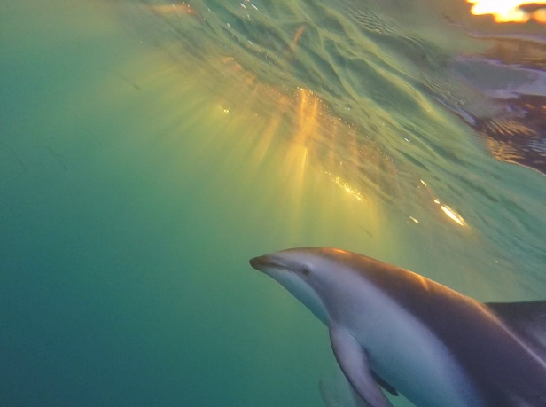 Dolphin Encounter Kaikoura thesweetwanderlust.com