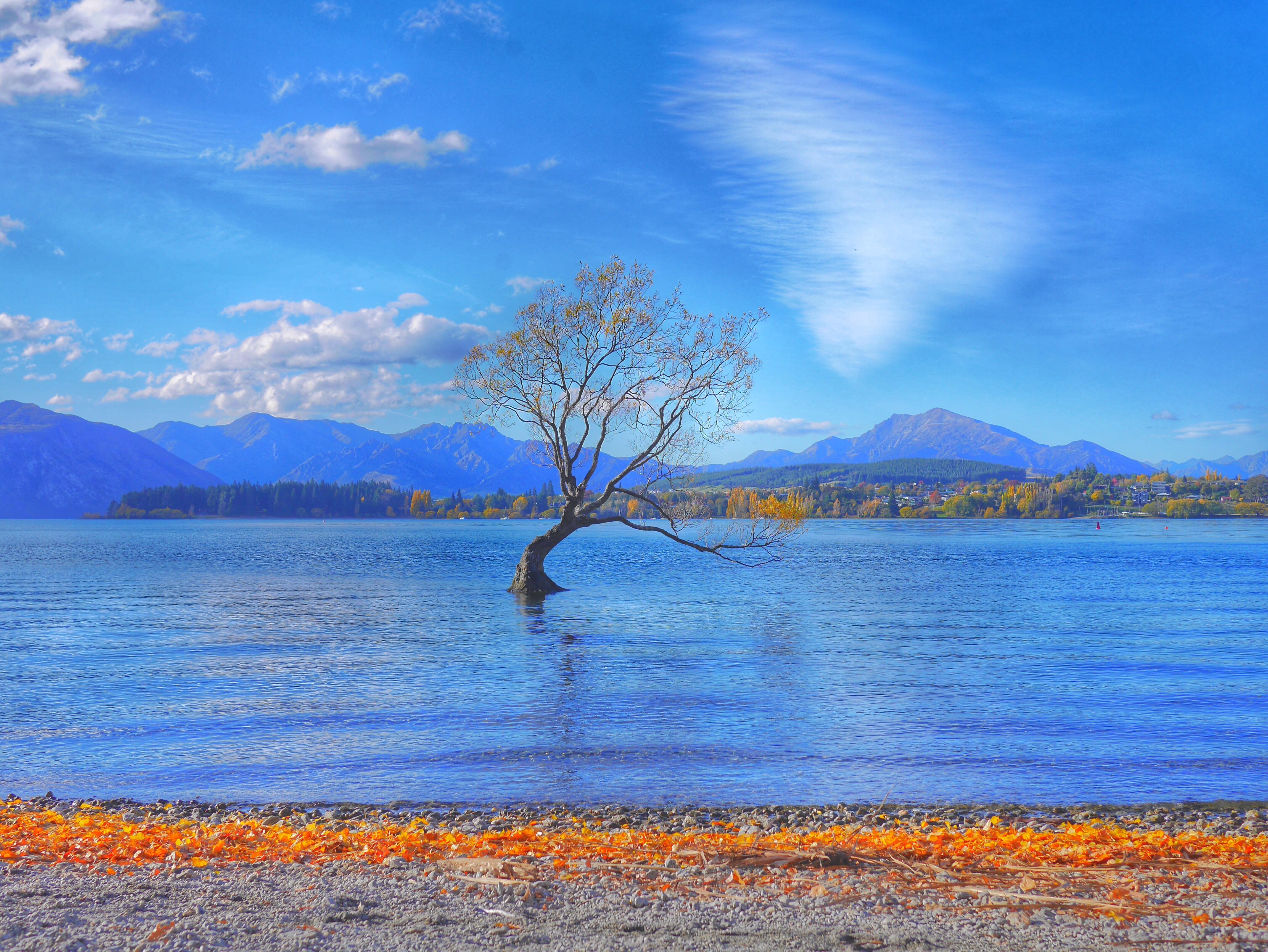 Wanaka Tree thesweetwanderlust.com