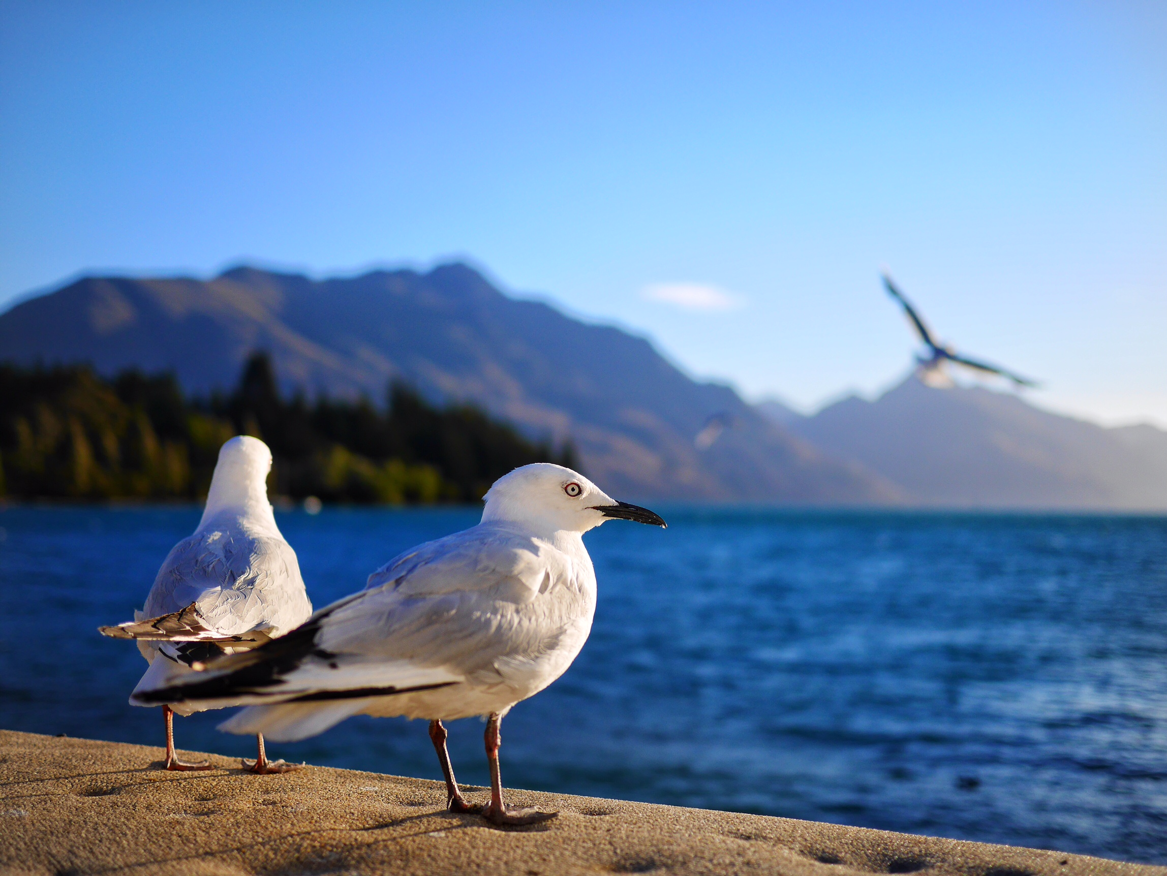 Lake Wakatipu thesweetwanderlust.com
