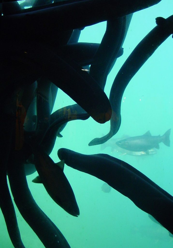 Queenstown Underwater Observatory Lake Wakatipu