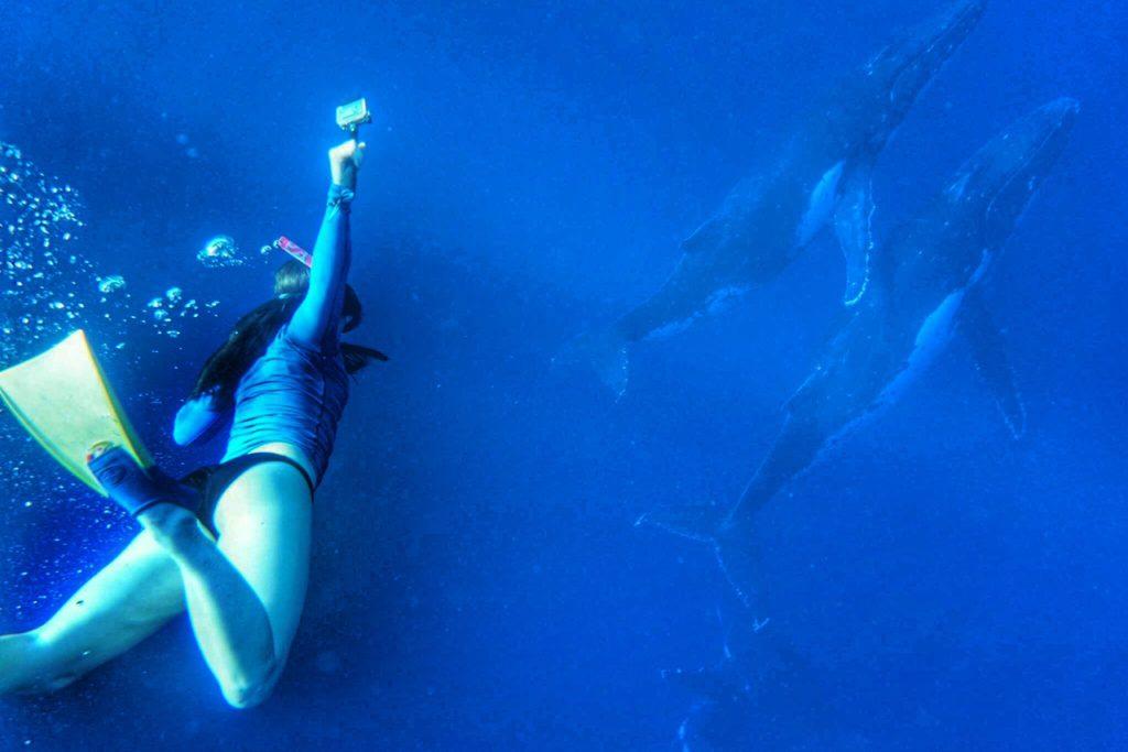 humpback whales in 'Eua Tonga thesweetwanderlust.com