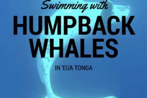 13 things to know: Swimming with whales in 'Eua Tonga