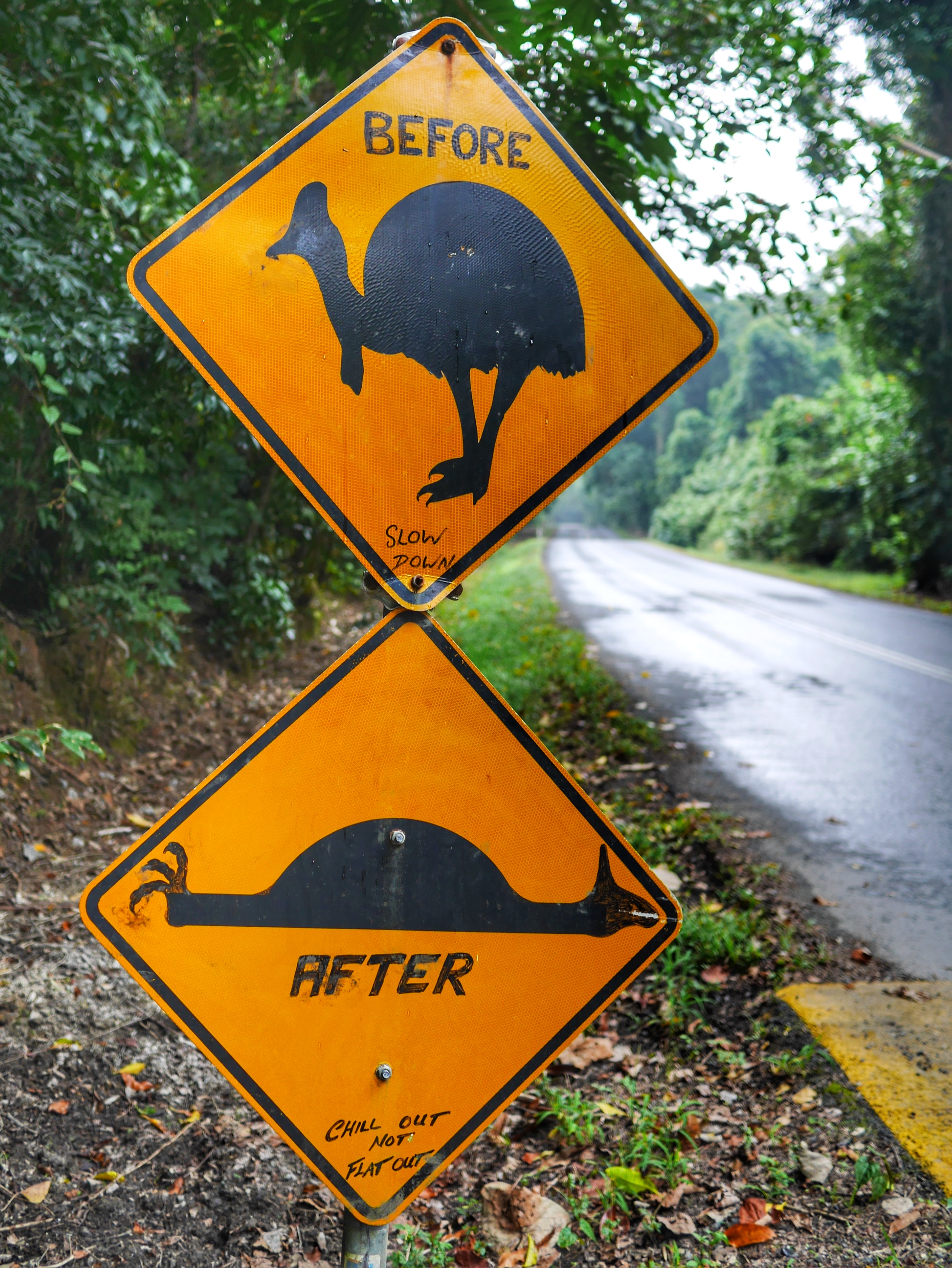 cassowary sign Cape Tribulation thesweetwanderlust.com