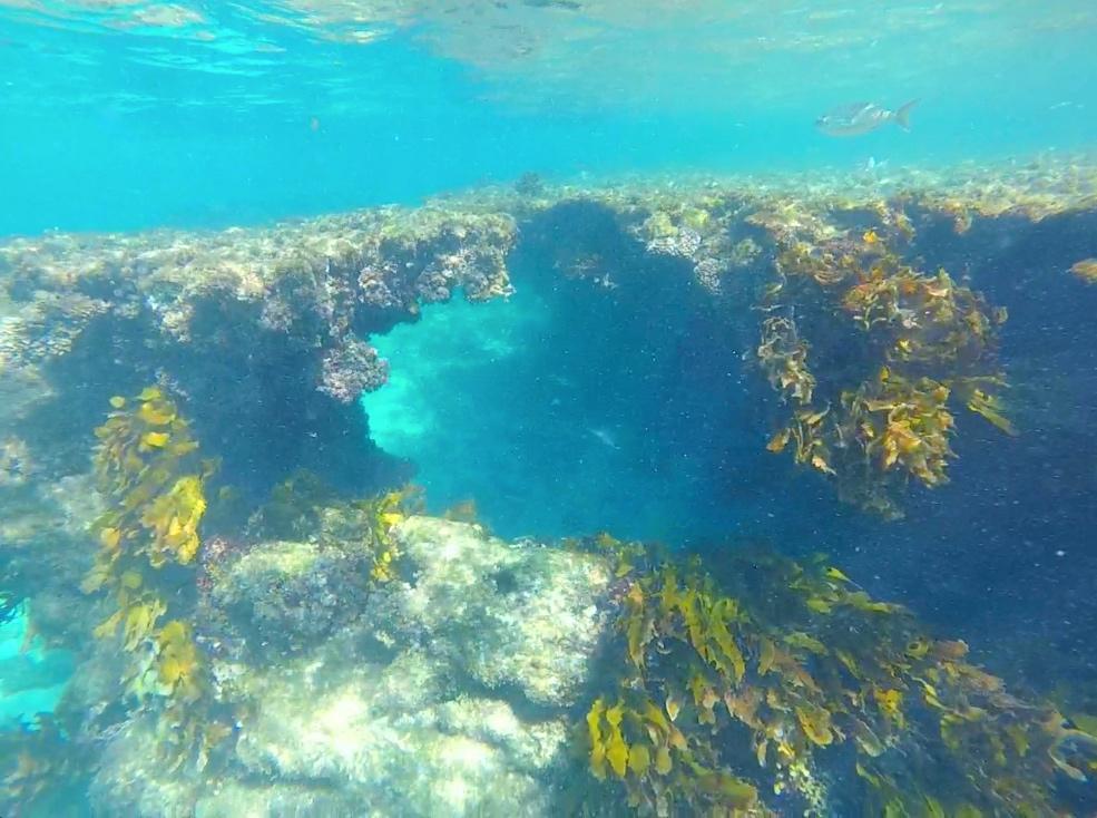 Little Salmon Bay snorkelling