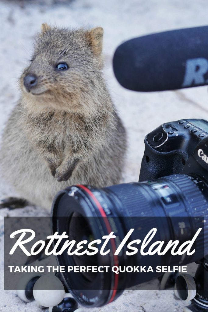 Rottnest Island and the perfect quokka selfie