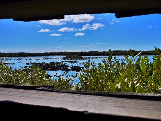 Mangrove Bay bird watching Exmouth