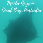 Swimming with manta rays in Coral Bay