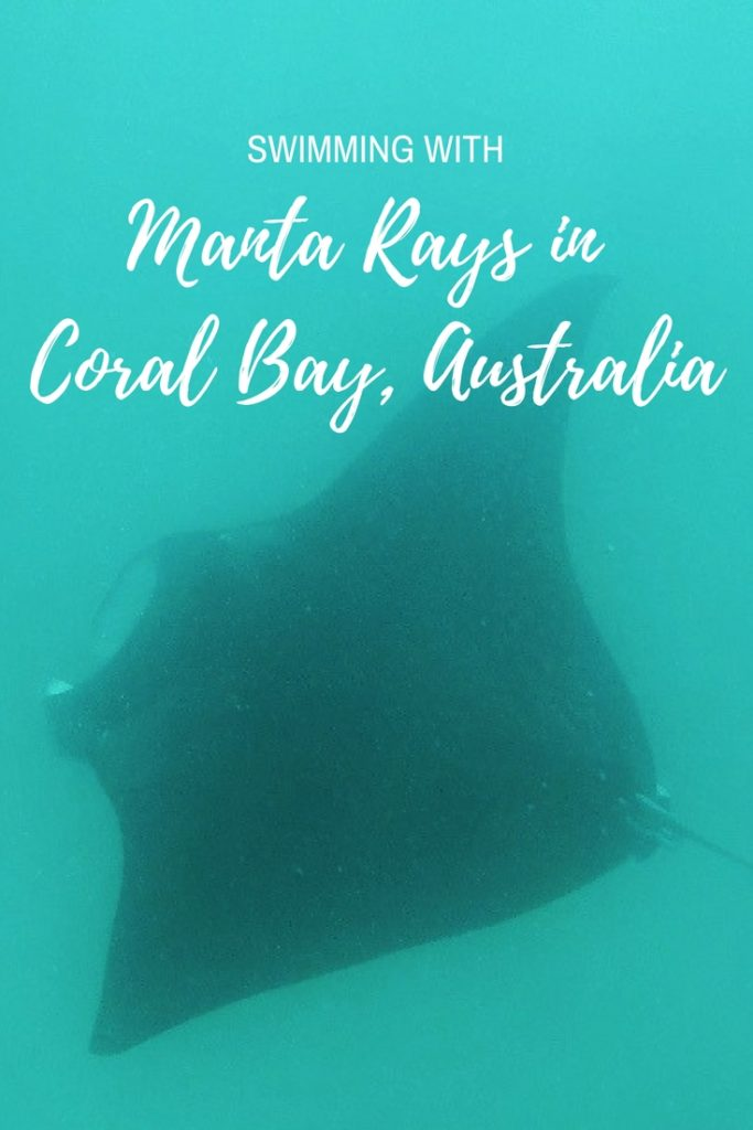 Swimming with manta rays in Coral Bay Australia with Ningaloo Marine Interactions