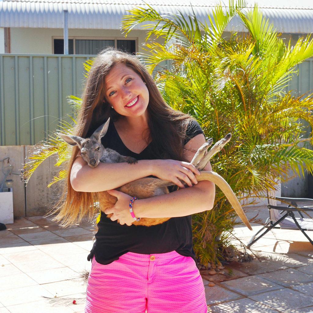 Volunteer with kangaroo joey Exmouth Western Australia