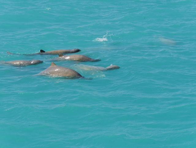 Snubfin Dolphin tour Broome Australia