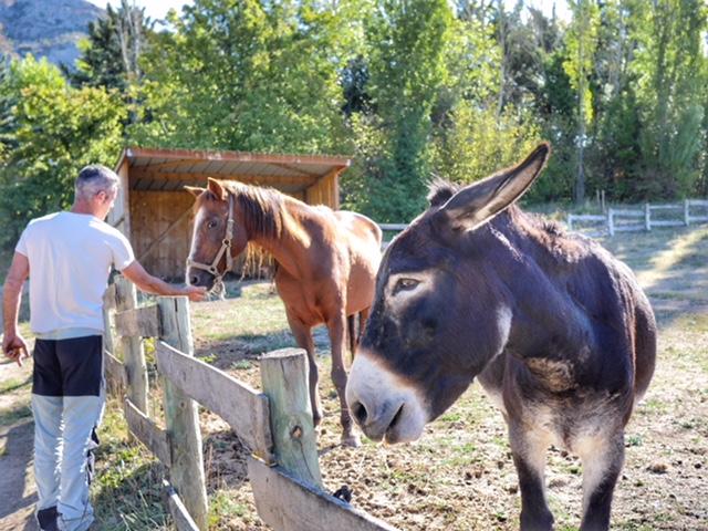 La Bastide de Moustiers donkey and horse