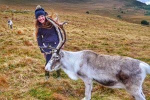 Visit Santa's reindeer's Scottish cousins