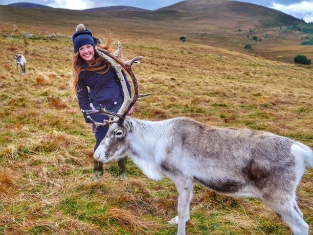Scotland's reindeer herd