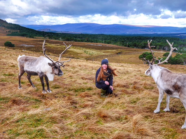 Visit Scottish Cairngorms Reindeer