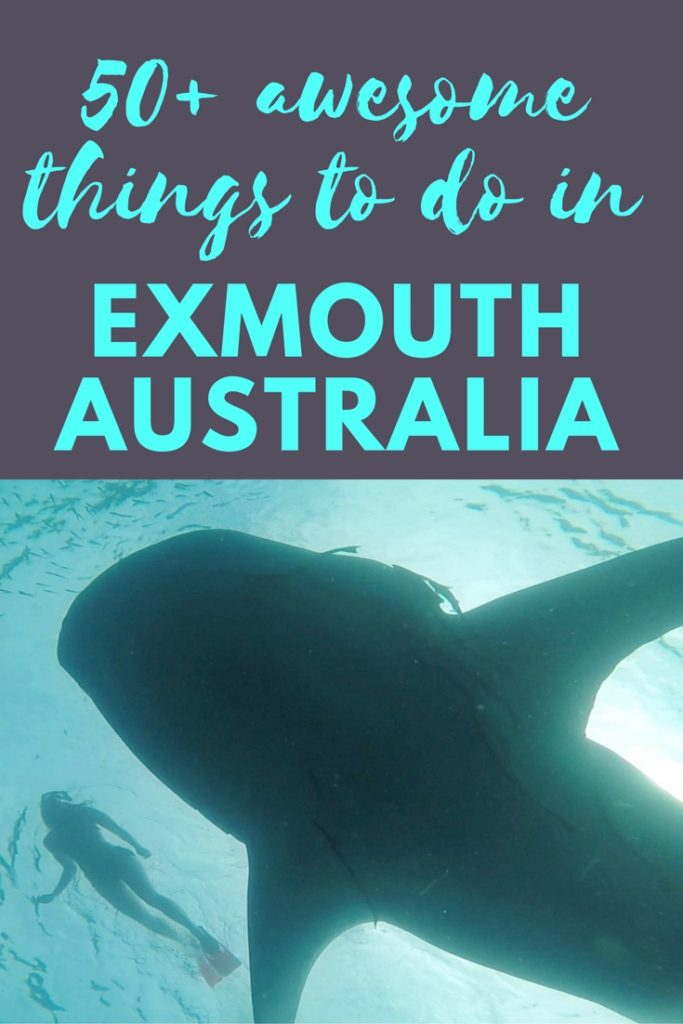 50+ awesome things to do in Exmouth Western Australia whaleshark