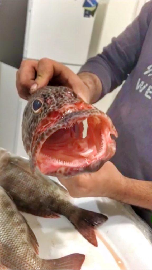 Fishing Exmouth