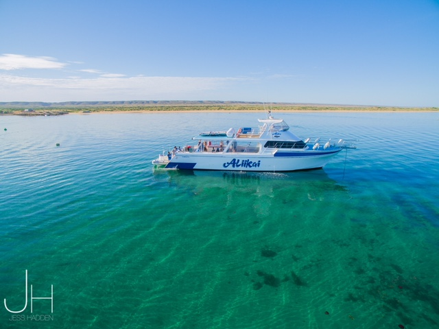 Swimming with whale sharks at ningaloo reef the sweet wanderlust - Ningaloo reef dive ...