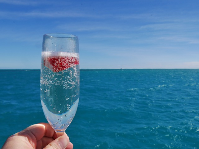Champagne after whale shark swim