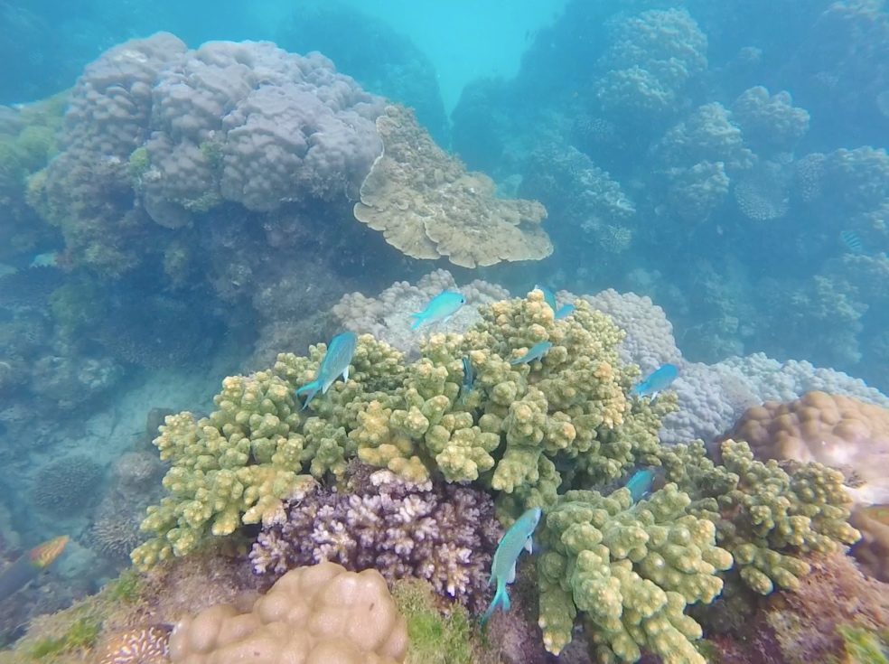 Snorkeling on Ningaloo Reef from Coral Bay
