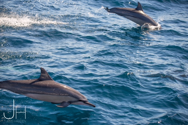 Spinner Dolphins Exmouth