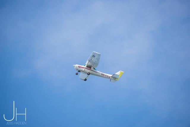 Whale shark spotter plane