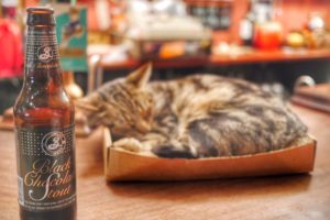 Bag of Nails Cat Pub in Bristol England
