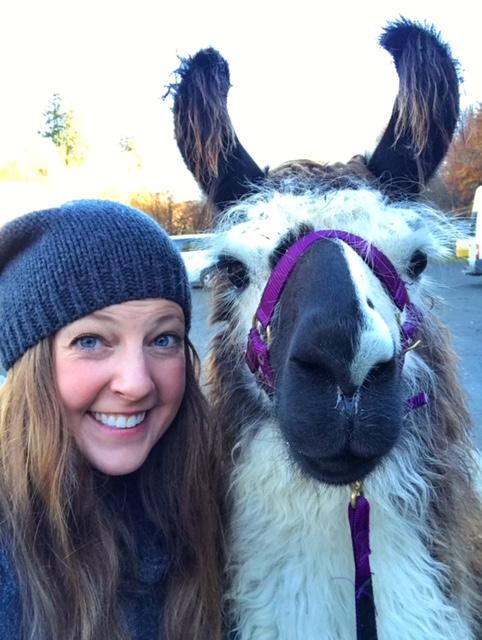 llama trekking in Scotland