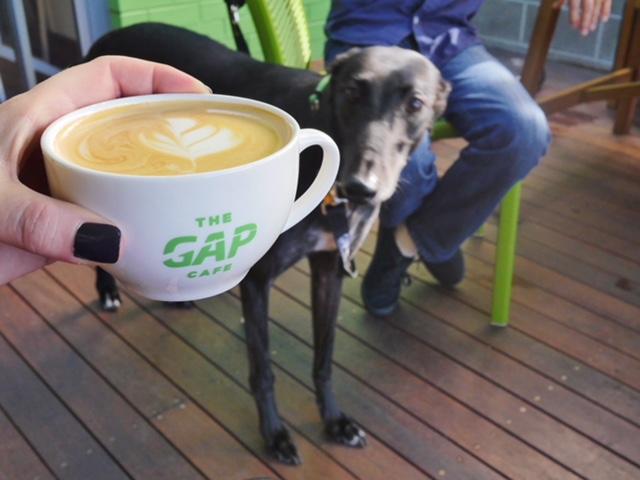 Greyhound Adoption Program Cafe Melbourne
