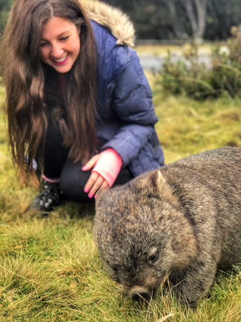 Wombat at Peppers Cradle Mountain Lodge