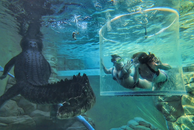 Crocosaurus Cove Cage of Death Darwin