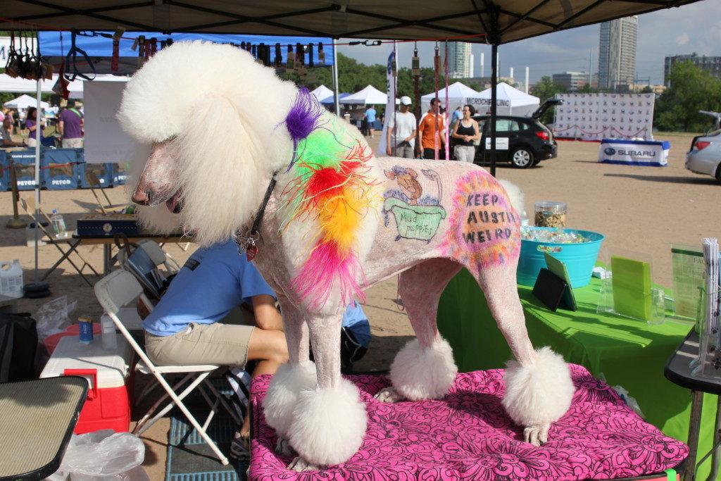 Keep Austin Weird - spray painted poodle