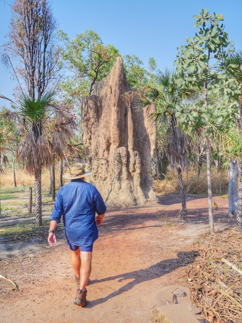 Termite mounds on Wayoutback Australia Safaris tour