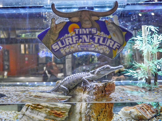 Tim's Surf & Turf baby crocodile