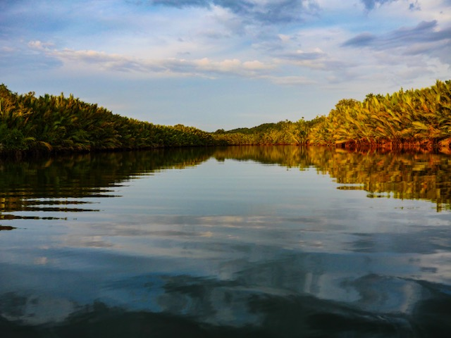 Kayak Asia Bohol Philippines Kayak in the mangroves