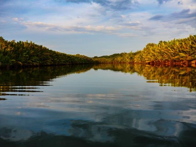 Kayak Asia Bohol Philippines Kayak in the mangroves