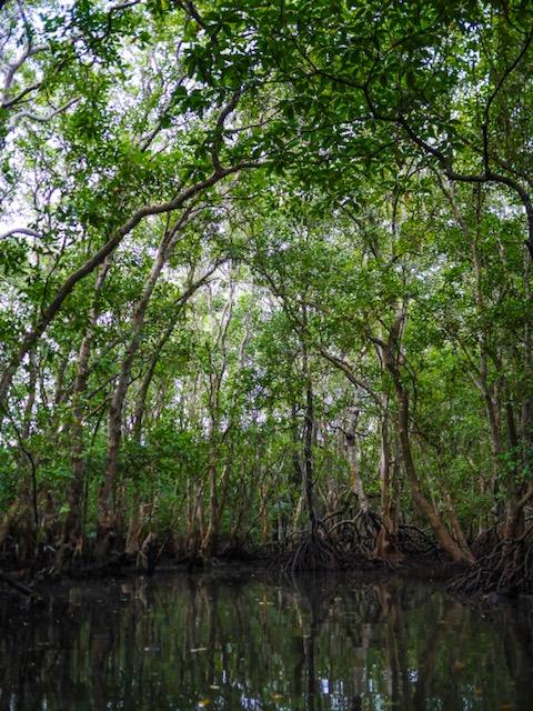 Kayak Asia Philippines - mangroves Bohol