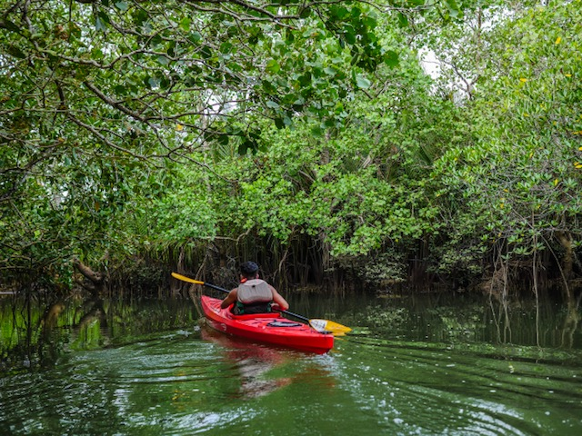 Kayak Asia Philippines - sustainable tourism Bohol - Kayak in the mangroves