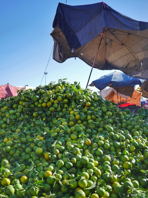 Azrac Surf and Yoga Retreat Morocco green oranges at the Aourir souk