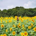 20 awesome things to do in Ibaraki Prefecture